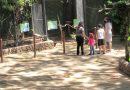 Zoológico da Cidade da Criança reabre ao público durante semana